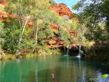 Fern pool, en amont de la cascade Fortescue