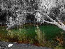 Rivière dans la gorge Knox