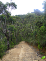 Sentier menant au Mont Banks