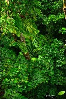 Vue sur la végétation depuis la passerelle