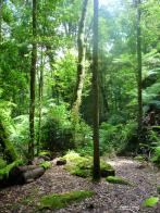 Court sentier dans une forêt de la vallée Megalong