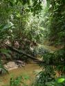 sepilok orangoutang rehabilitation center