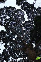 sepilok rainforest discovery center