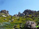 Entre rochers et fleurs, à Capo testa.