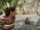 Les macaques crabiers sont vraiment à proximité.