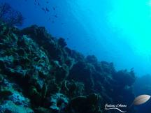 Fond marin à Cozumel