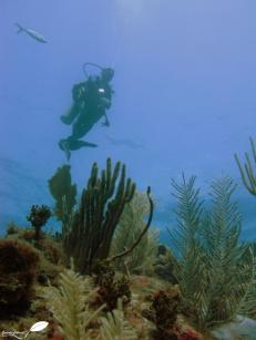 Fond marin de la côte