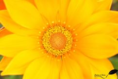 Cœur de fleur