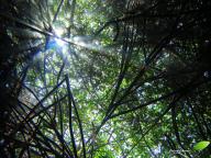 Sous la mangrove