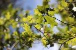 L'automne n'a pas encore saisi tous les feuillages...