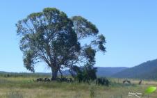 Le sentier menant à l'observatoire commence, et les rencontres avec les kangourous également