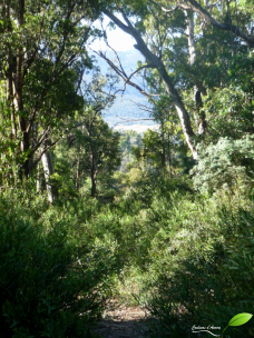 Aperçu du sentier menant à l'observatoire