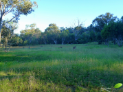 En retournant au parking je retrouve les kangourous