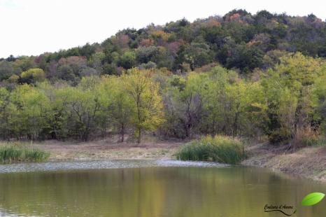 """""""Cattail pond"""""""