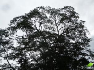 Un arbre décoré de singes...