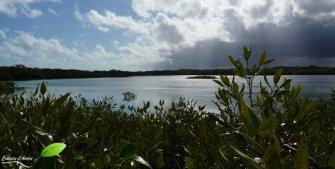 Vue sur Mangrove bay depuis l'observatoire à oiseaux.