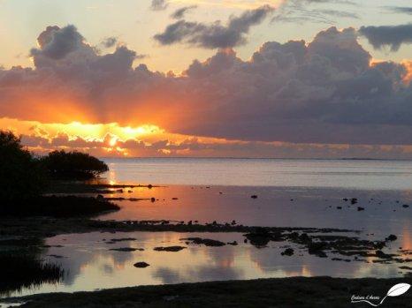 Coucher du soleil vers Mangrove bay...