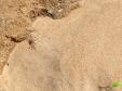 Petits crabe sur la plage