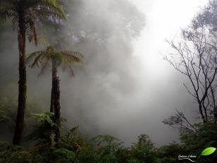 Waikiti vallee, vapeur d'une rivière d'eau bouillante...